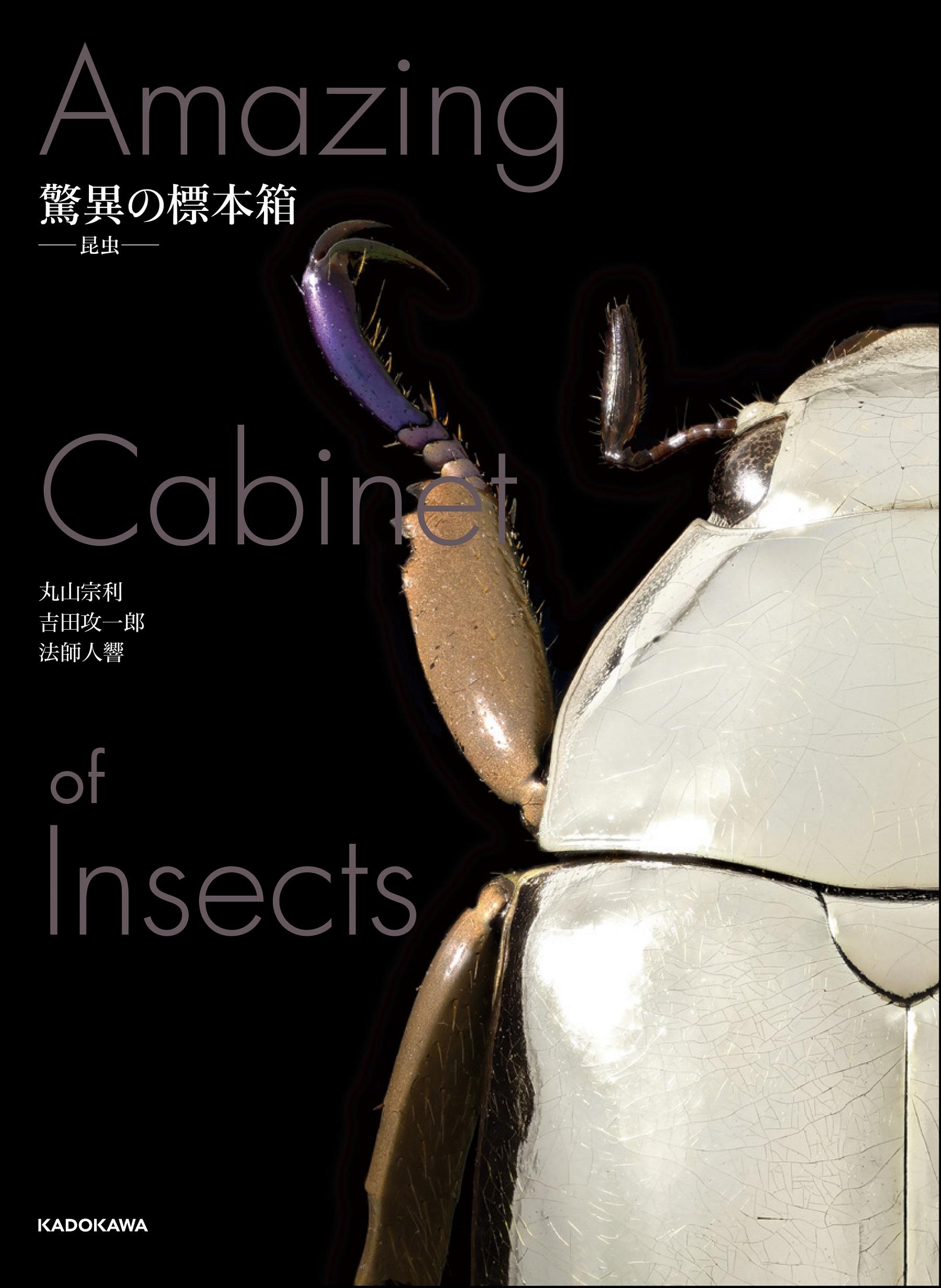 驚異の標本箱 −昆虫−
